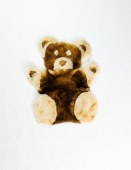 Teddy Bear / Brown-White